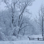 "Sunday, January 1, 2017: Wintertime ""Walk in the Woods"""
