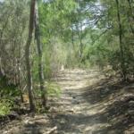 MUUC Trail Adopters Fells Walk & Cleanup: Saturday, May 20, 1:30 – 3:30 pm