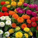 RIM Metro North Cluster 2021 Spring Flower Fundraiser