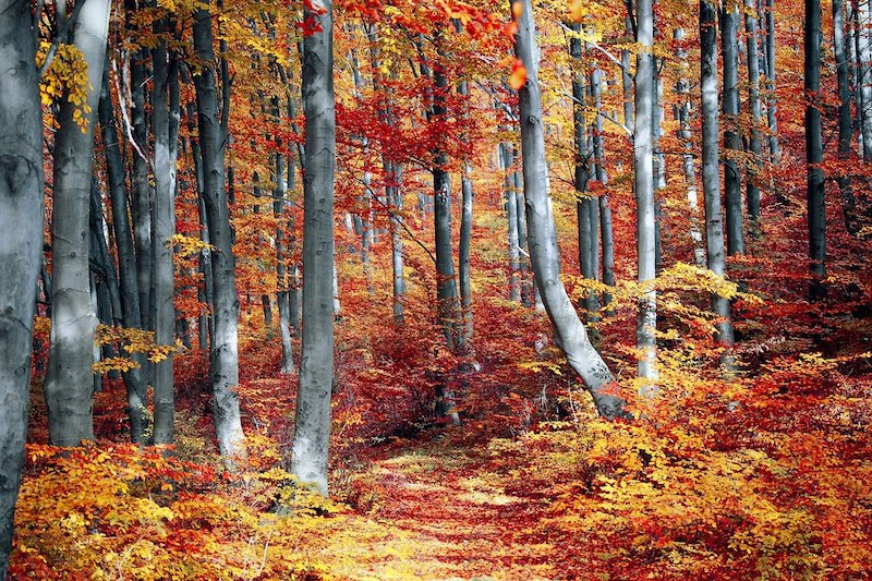 Hybrid Worship Sunday October 17, 10:30am:The Social Life of Trees