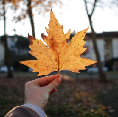 Outdoor Worship: Sunday October 17, 2pm,Cedar Park