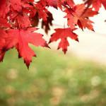 Annual Harvest Fair! Saturday, November 12, 9am – 2pm