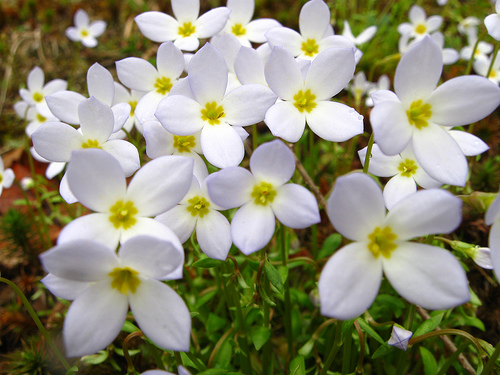 Worship Service: Sunday, June 14, 2015 – Coming of Age & Flower Communion